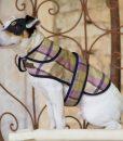 jasper, dog, coat